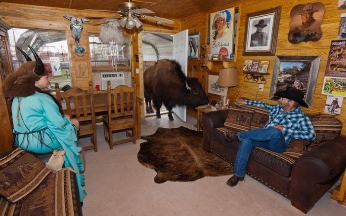 домашнее животное, ковбой