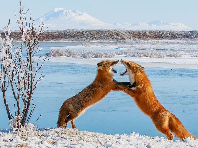 фотографии, животные, national geographic,
