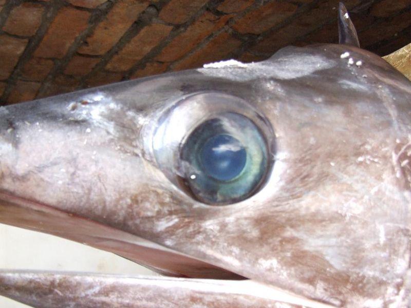 глаз, неизвестное животное, природа