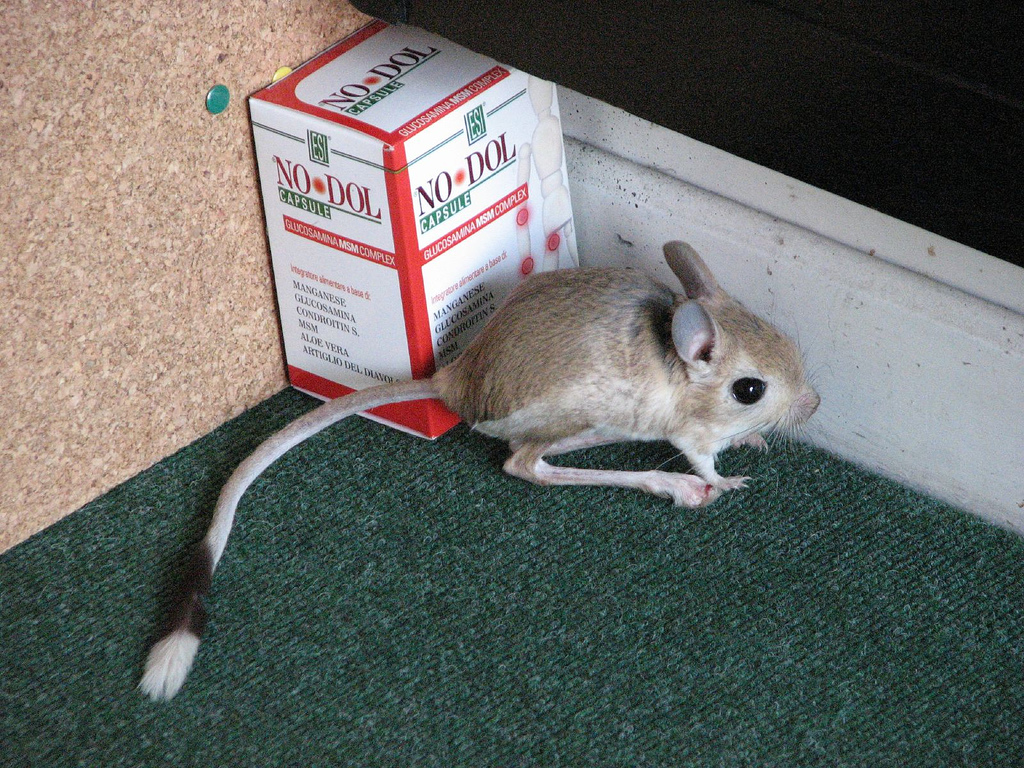 Interesting animal
