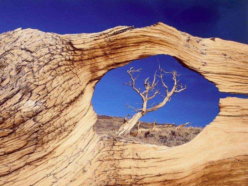 Живая природа (100 фото)