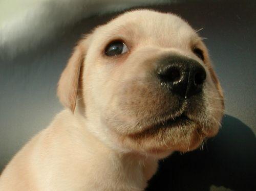 cachorros (muy tiernos)