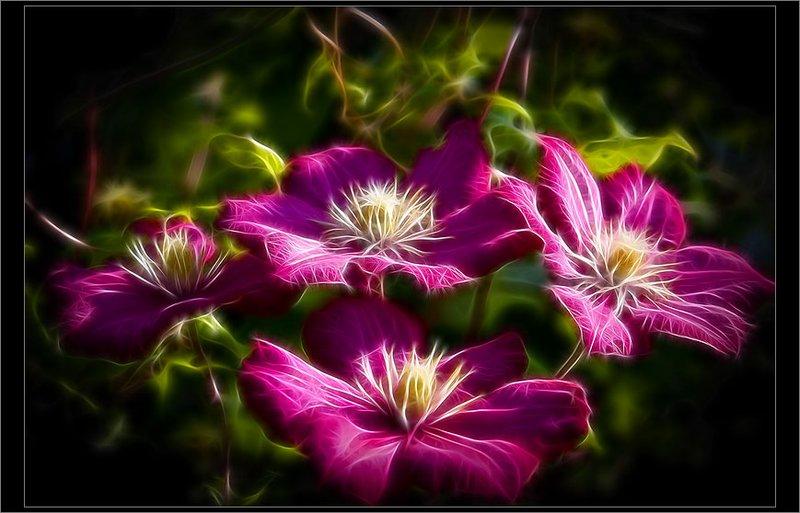 Про цветы (9 фото)