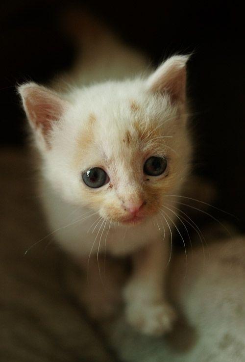 Жалкий котенок картинки