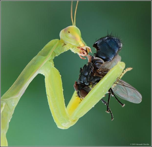 Макро насекомые (87 фото)