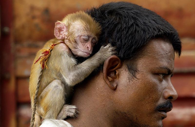 попкорном человек с обезьянкой картинки хозяйственная операция жизнедеятельности