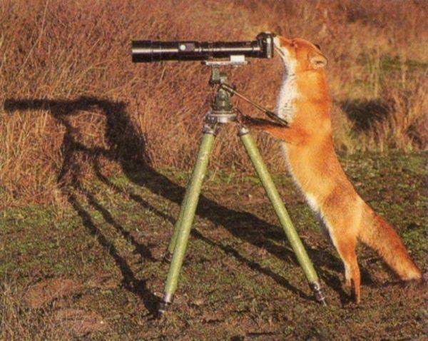 Фотографы-животные (36 фото)