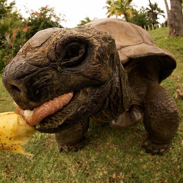 Приколы с черепахами картинки