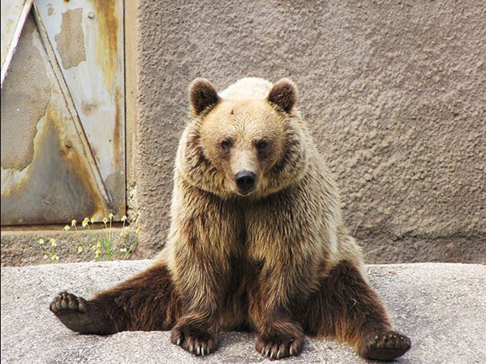 Спортивный медведь (7 фото)