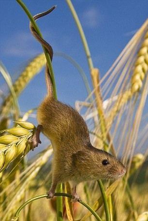 http://ru.fishki.net/picsw/092010/24/post/mish/mish008.jpg
