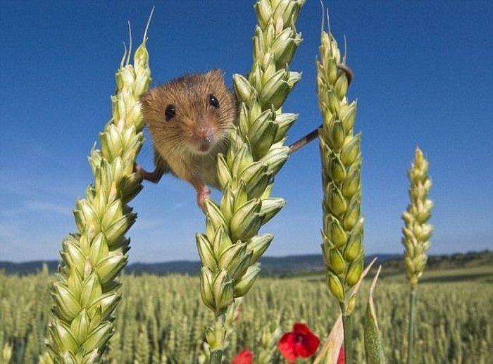 Тайная жизнь мышей (10 фото)
