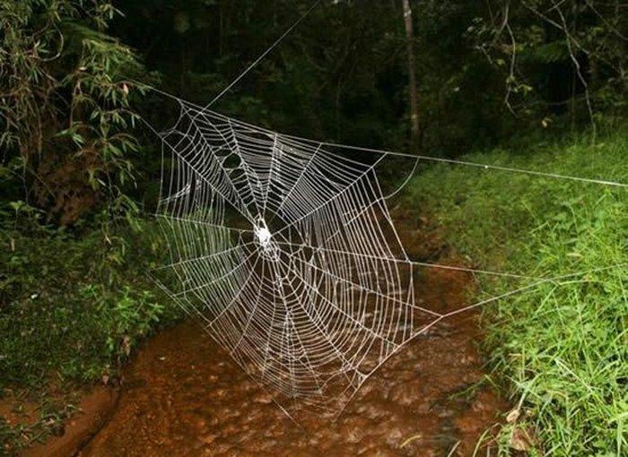 Самая большая паутина в мире (6 фото)