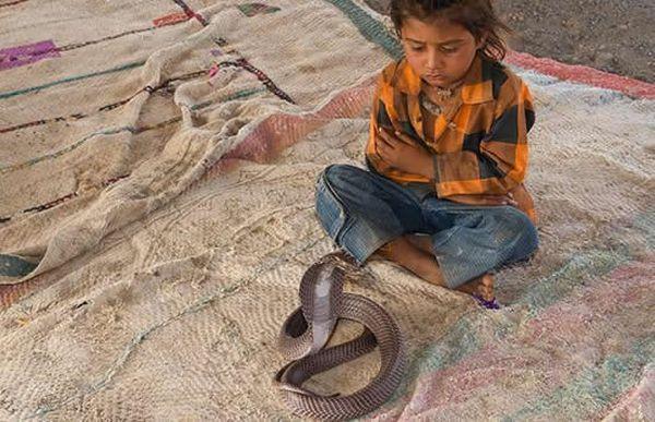 Заклинателями змей становятся в 2 года отроду ...(9 фото)