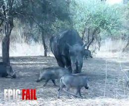 Злобный носорог