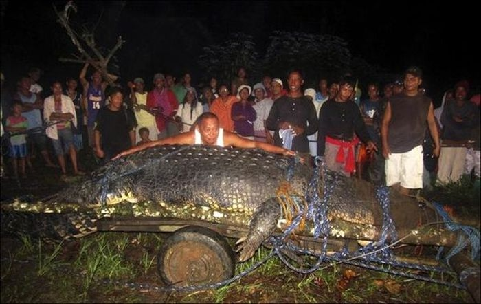 На Филиппинах поймали гигантского крокодила (4 фото)