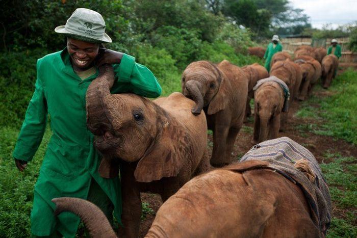В Кении есть детский дом для слонов (18 фото)