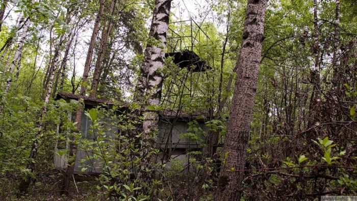 Лес, полный тайн (45 фото)