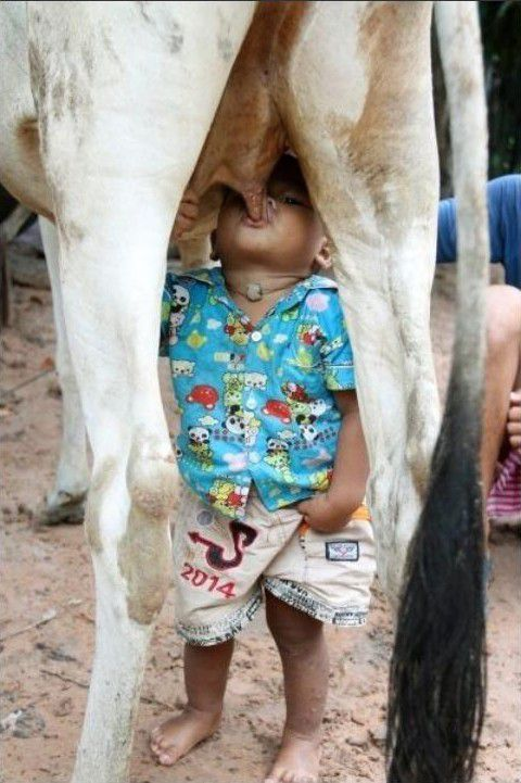 Молоко от производителя (10 фото)