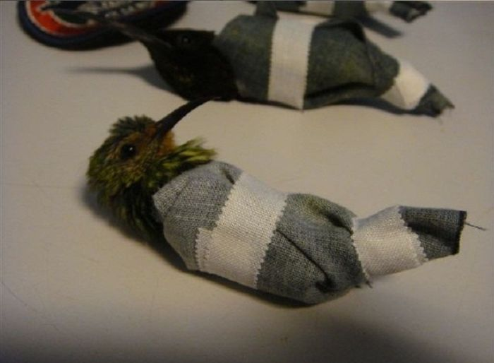 Перевозчик колибри задержан (5 фото)