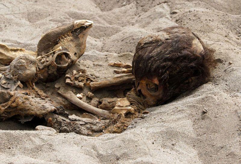 bones06 В Перу обнаружены останки принесенных в жертву детей