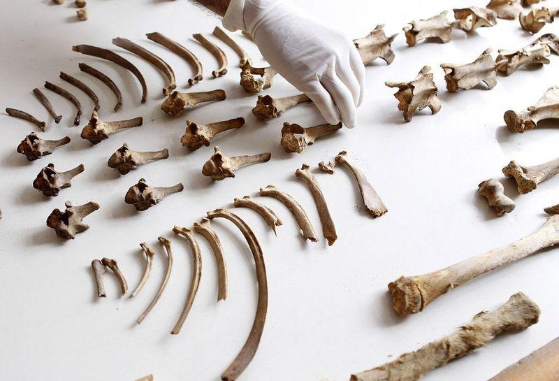 bones09 В Перу обнаружены останки принесенных в жертву детей