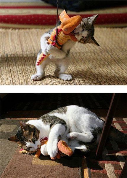 Повзраслевшие котята (15 фото)