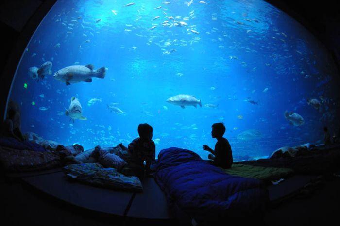 начало самый большой в мире аквариум фото условиям, каждый фотопрогульщик