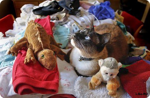 Коты-клептоманы (7 фото)