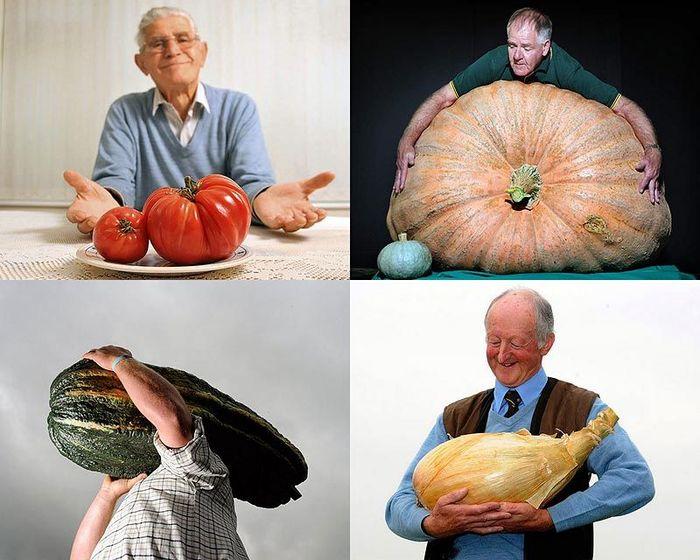 Гигантские овощи (20 фото)