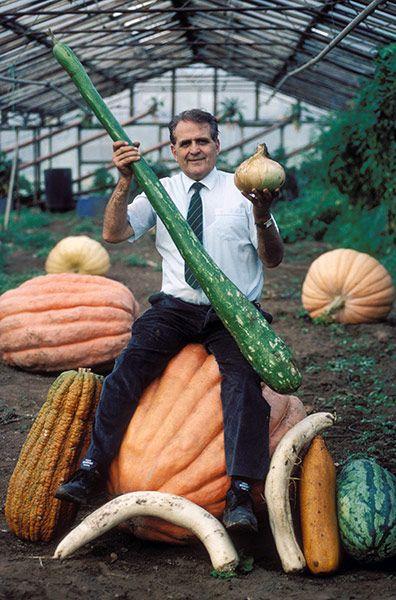 veggies03 Гигантские овощи