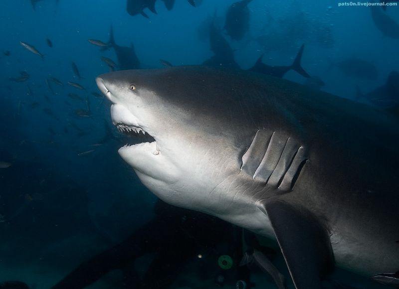 Красота подводного мира (50 фото)