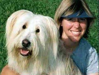 Собаки и их владельцы (65 фото + 1 видео)