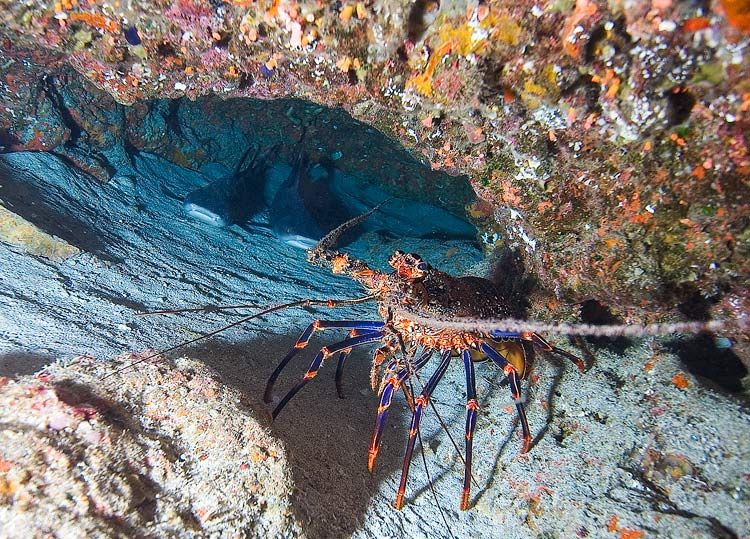 Красота подводного мира. Часть 3. (60 фото)