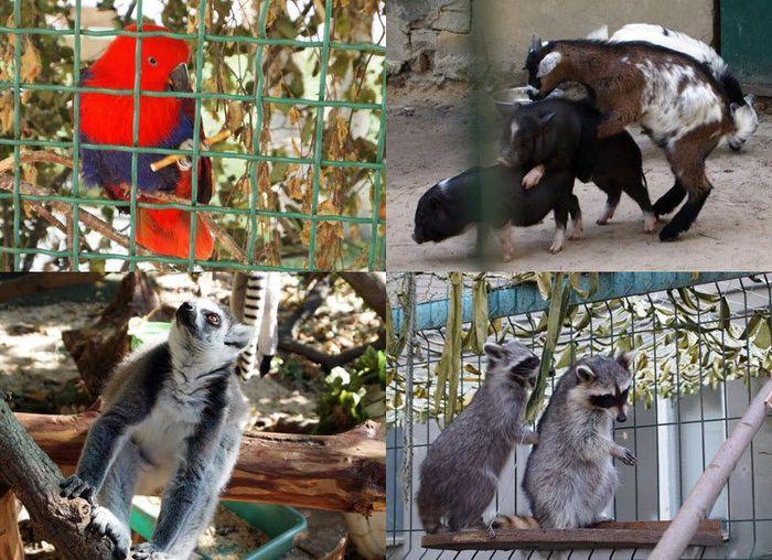 Частный зоопарк в Харькове (78 фото)