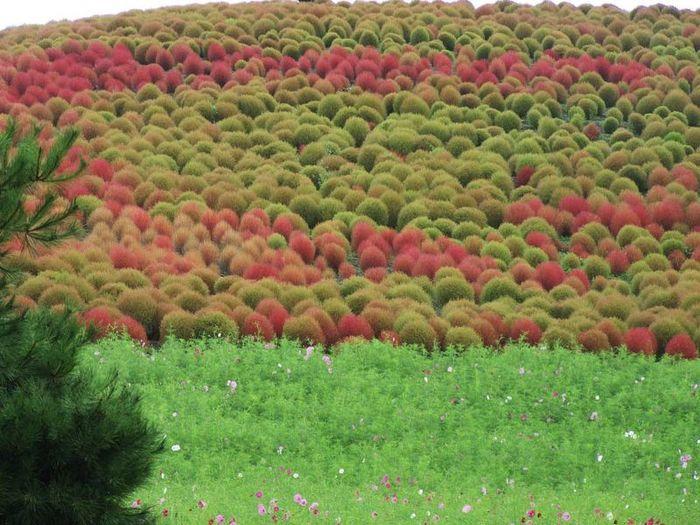 Восстановленный парк Хитачи (17 фото)
