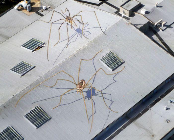 Огромные пауки на крыше (4 фото)