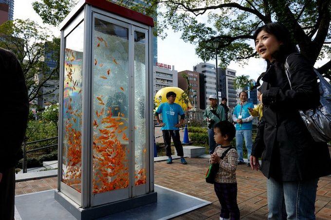 Золотые рыбки на улицах Токио (8 фото)