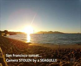 Чайка украла камеру