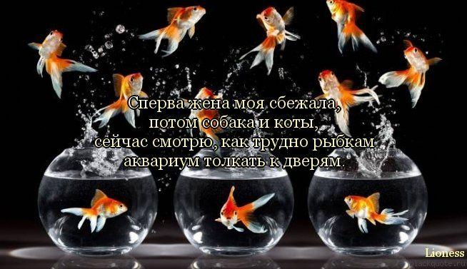 http://fishki.net/picsw/092012/18/post/cit/cit-005.jpg