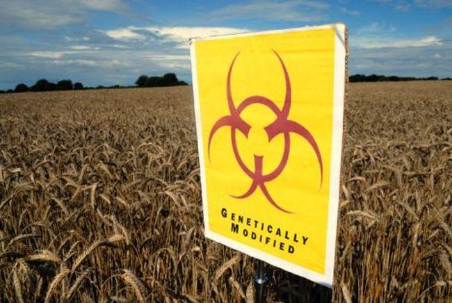 Скандал по поводу генетически модифицированных продуктов (2 фото)