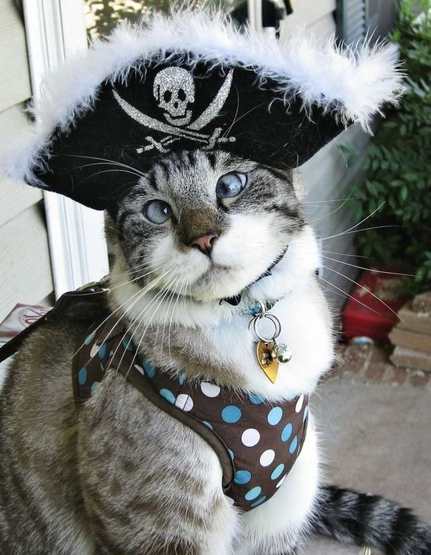Самый милый косоглазый кот (6 фото)