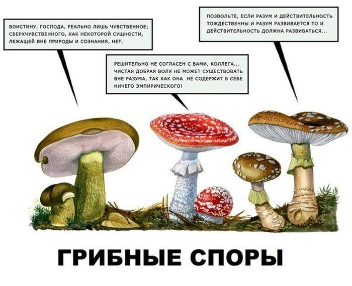 http://ru.fishki.net/picsw/092012/21/pics/pics-012.jpg