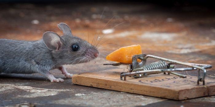 Везучая мышь (20 фото)