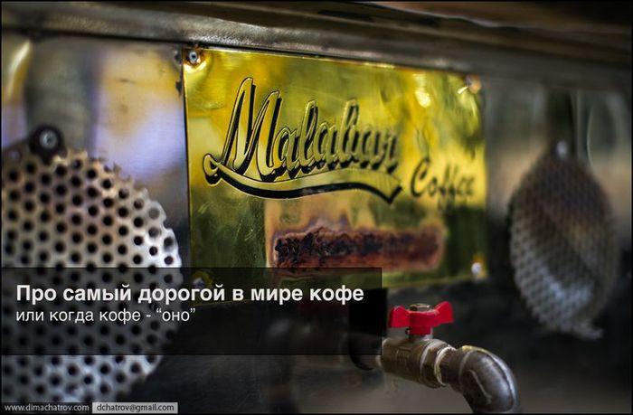 Самый дорогой кофе в мире (14 фото)