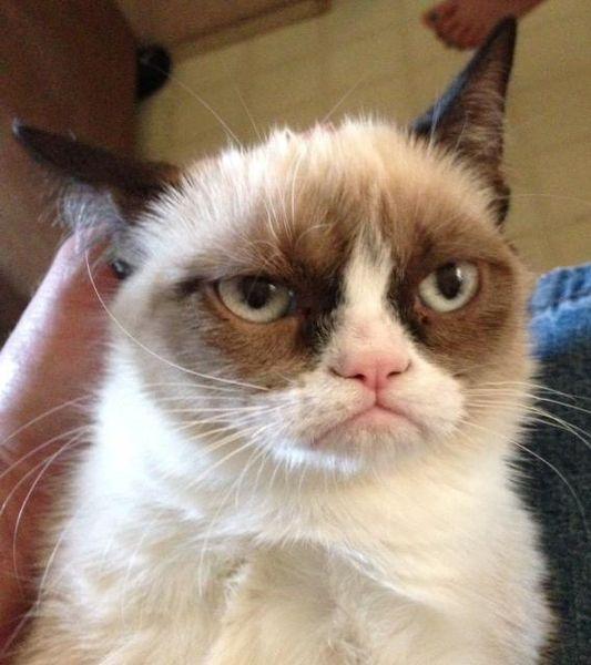 Очень недовольный кот интернета (3 фото)