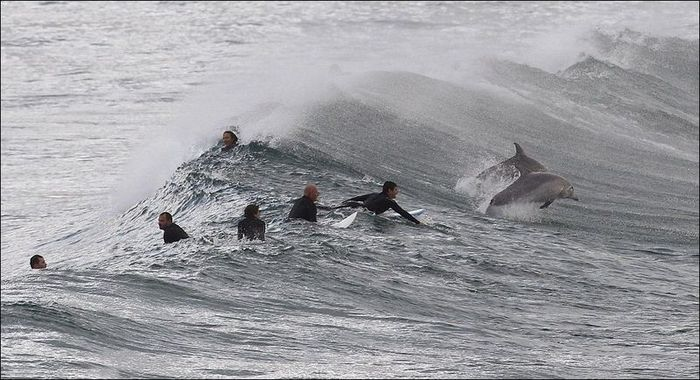 Дельфины показали мастер-класс (5 фото)