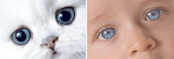 Children and kittens