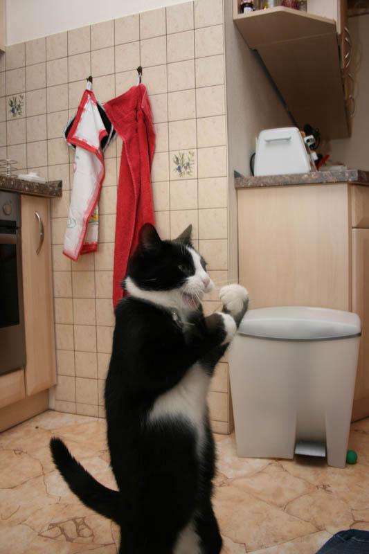 http://fishki.net/picsw/102007/08/bonus/animals/animals_004.JPG