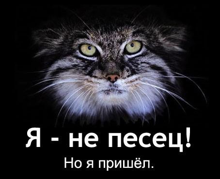 Погладь кота! (22 фото)
