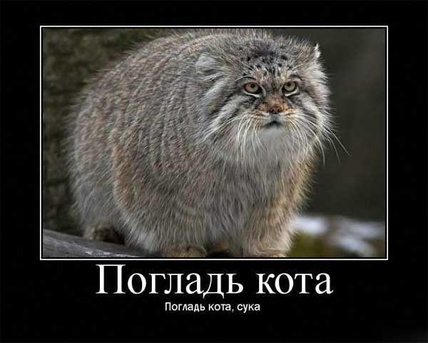 http://fishki.net/picsw/102008/29/poglad/tn.jpg